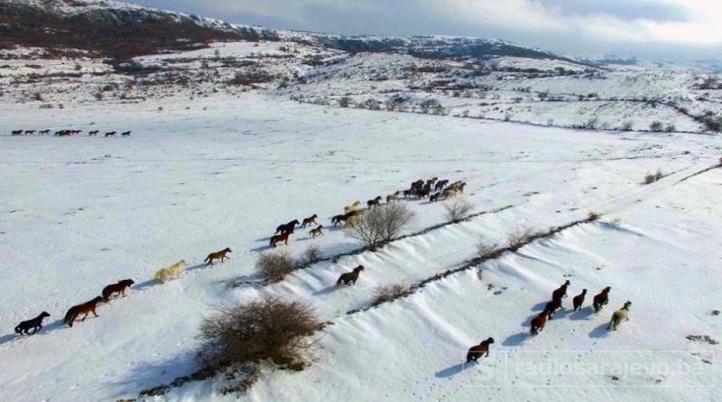 I ovo je Bosna i Hercegovina: Pogledajte snimku divljih livanjskih konja iz zraka