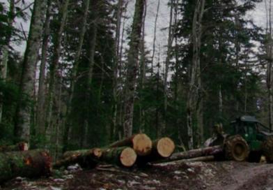 Nezadovoljni šumari Šumarije Jajce tvrde kako se vrši neprimjeren pritisak na uposlenike, slučaj završio na Kantonalnom sudu!?