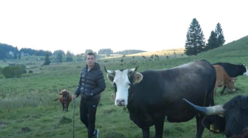 SREDNJA BOSNA: Borisove krave oplođuju samo šampioni korida